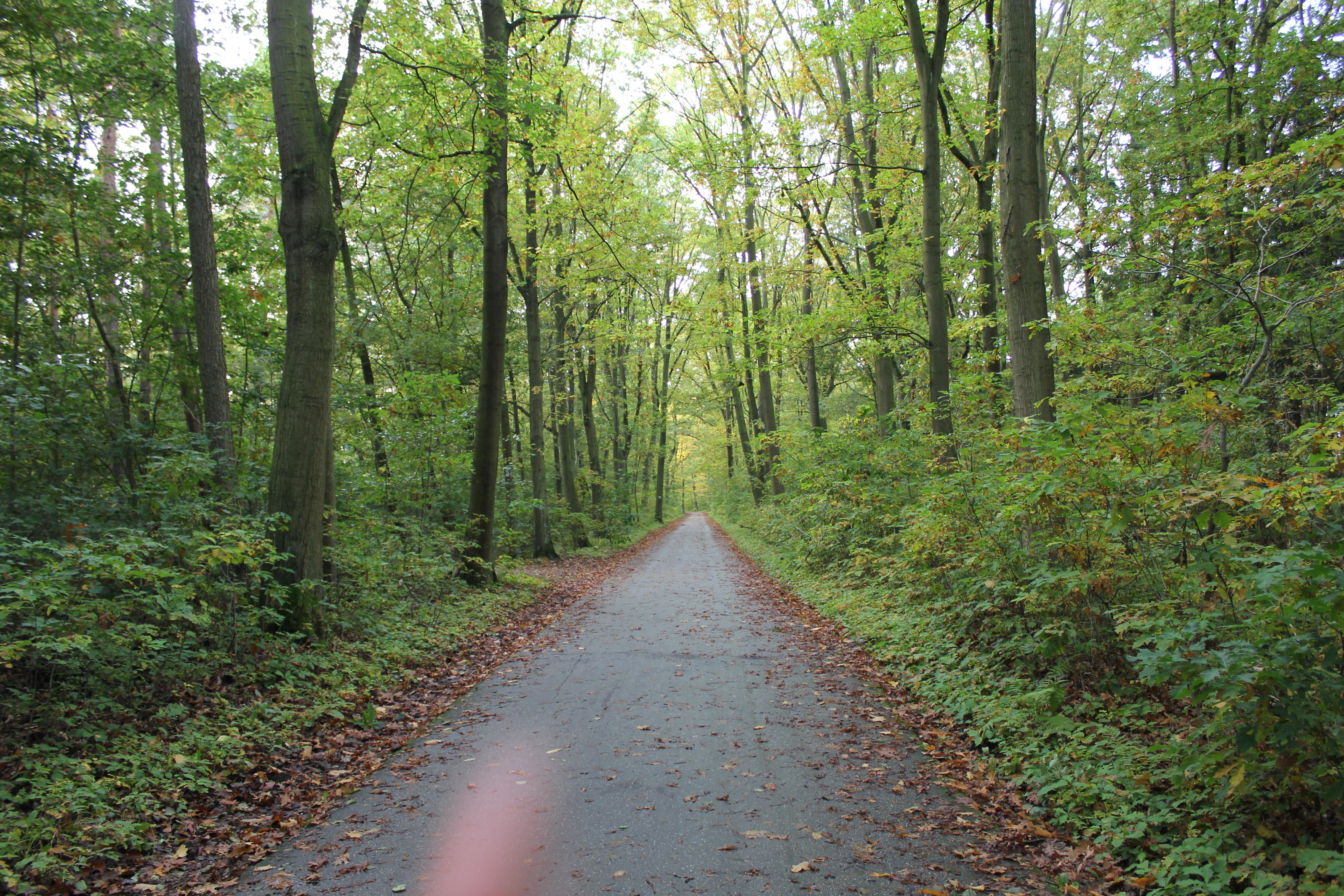 De route van de zelfzorg
